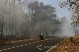 Kebakaran Hutan Baluran Situbondo Menggangu Arus Lalin Pantura