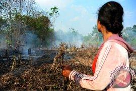 Menteri LHK lepaskan status 6.901 hektare hutan lindung di Sekadau