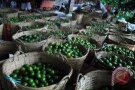 Kementan batal pangkas bantuan program hortikultura Sambas