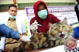 815 laporan kasus gigitan hewan pembawa rabies di Kalbar