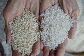 Warga Baturaja: Beras bantuan yang dibagikan bau dan tidak layak konsumsi