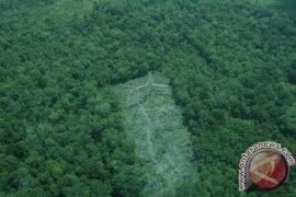 250 Ribu Hektare Hutan Desa Dikelola Masyarakat