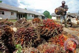 Harga sawit di Subulussalam terus naik