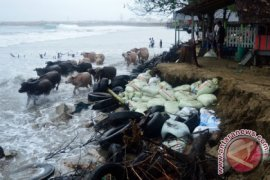 Pemerintah Aceh tanggulangi abrasi Pantai Jilbab Abdya