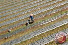 Pemkab Aceh tengah kembangkan hortikultura