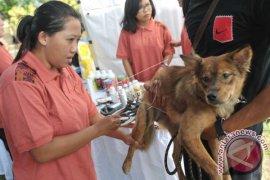 Pemkot Denpasar Sterilisasi Anjing Kendalikan Rabies