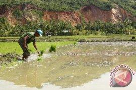 Korem Lilawangsa cetak sawah baru 487 hektare