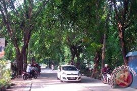 Pohon Rawan Tumbang Di Bekasi Dipangkas