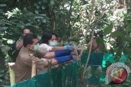 BKSDA Jabar Melepasliarkan 20 Kukang Hasil Perburuan