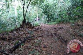 Tiwingan Villagers in Riam Kanan No Longer Farming Rice