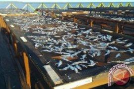 Pembangunan Tempat Penjemuran Ikan Di Penajam Rampung