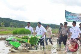 Balangan targetkan luas tanam padi 43 ribu hektar