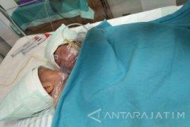 Berat Badan Bayi Desta-Desti Meningkat Pasca-Operasi
