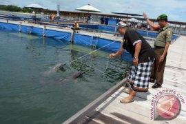 Warga Desa Serangan Tutup Aktivitas Wisata Dolphin