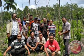 GIZ Dampingi Peningkatan Kapasitas Petani Lada Sambas