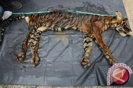 WWF harap sindikat harimau Sumatera dihukum berat