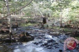 30 Ribu Hektare Gambut Kalsel Segera Direstorasi
