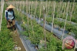 Perdesaan di Bali alami deflasi 0,29 persen