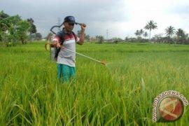 Sukabumi waspadai penyebaran hama tanaman