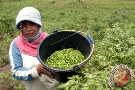 Harga hortikultura anjlok di Aceh