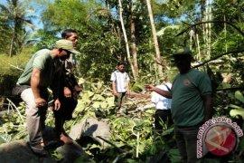 Polisi Buleleng Selidiki Bocah Tewas Tertimpa Pohon