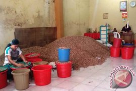 Harga biji pala bundar di Ambon naik