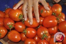 Peneliti IPB Teliti Bioetanol Dari Tomat