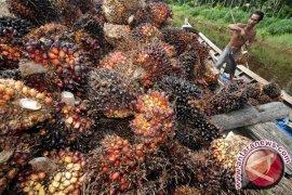 WWF dorong inovasi dan teknologi pengembangan sawit