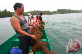 Pemkot Ternate diminta tambah modal Alga Kastela