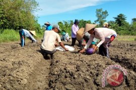 Pemkab Keerom bangun pasar induk untuk petani