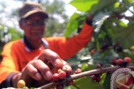 Pemulihan sektor kopi mendesak dilakukan