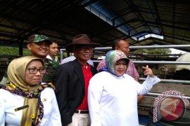 Bogor Siap Berkembang Jadi Wilayah Penghasil Domba Ekspor