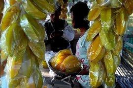 Objek Wisata Kebun Belimbing Bojonegoro Panen Raya (Video)