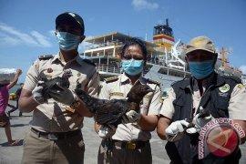 Karantina Pertanian Bali sita benih sayur ilegal (video)
