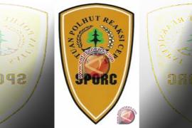 Sporc: Pembalakan Hutan Secara Liar Kembali Marak di Kalbar