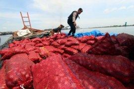 Delapan ton bawang merah ilegal dimusnahkan