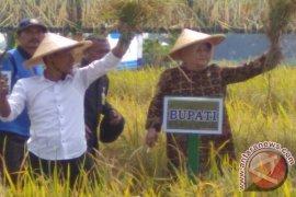 Bogor Baru Penuhi 60 Persen Kebutuhan Benih Padi