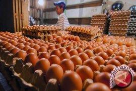 Amankah telur mentah dikonsumsi?