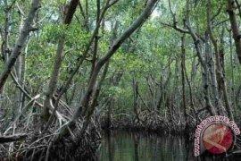 DPRD Bangka Tengah minta masyarakat jaga spesies hewan di hutan Mangrove Kurau