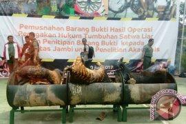 BKSDA Jambi musnahkan kulit harimau Sumatera