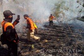 Hektaran Hutan di Taman Nasional Baluran Situbondo Terbakar