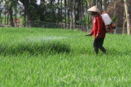 Petani semakin minati penggunaan pupuk organik