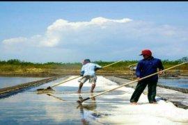 Masih Rendahnya Harga Garam Krosok di Probolinggo Rp1.000/Kg