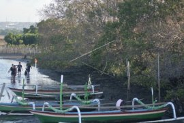Warga Batu Ampar pertahankan pembuatan arang mangrove