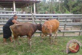 Distan verifikasi data penerima sapi bantuan pemerintah