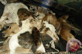 Mukomuko programkan pemusnahan anjing liar 2019