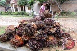 Pakar dunia akan sampaikan kajian bisnis kelapa sawit di Bali