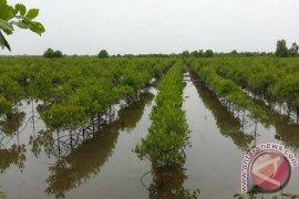 TNI AL tanam mangrove seluas 30 hektare