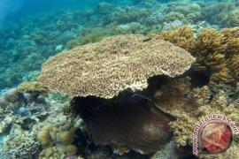 Wakatobi to reopen tourist destinations in July 2020