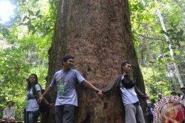 Bupati Ismunandar dan komunitas lingkungan tanam pohon ulin